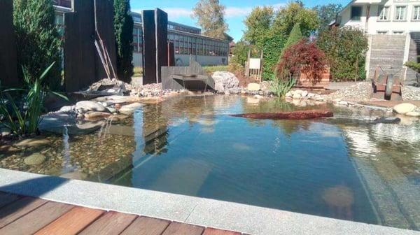 Schwimmteich_2