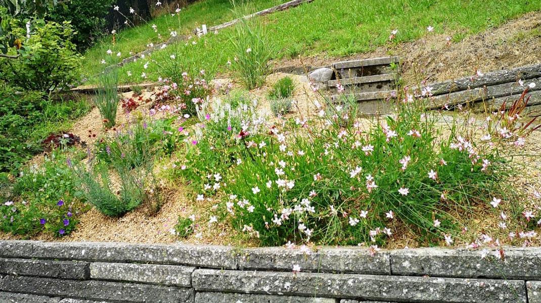 frühlingshafte Gartenbepflanzung